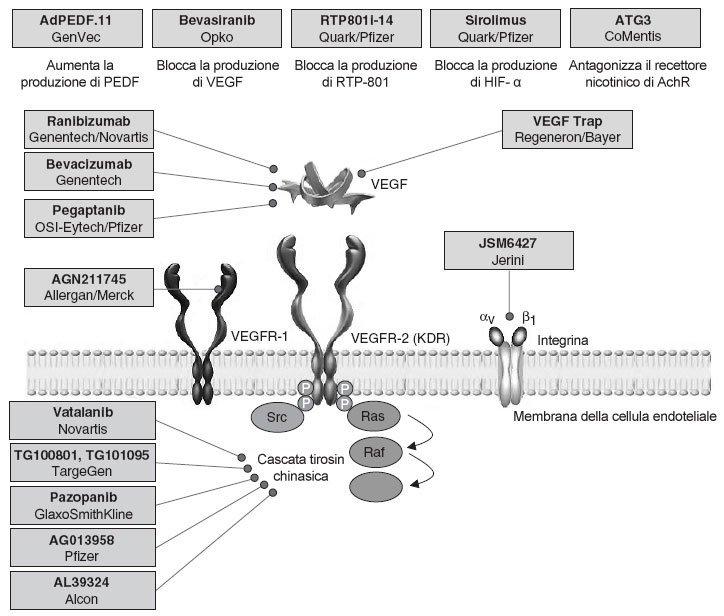 Degenerazione maculare senile neovascolare