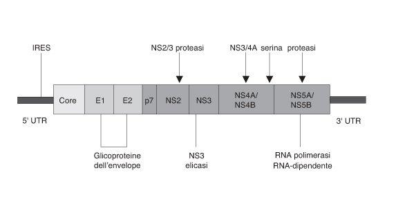 Farmaci in corso di sviluppo per l'epatite C